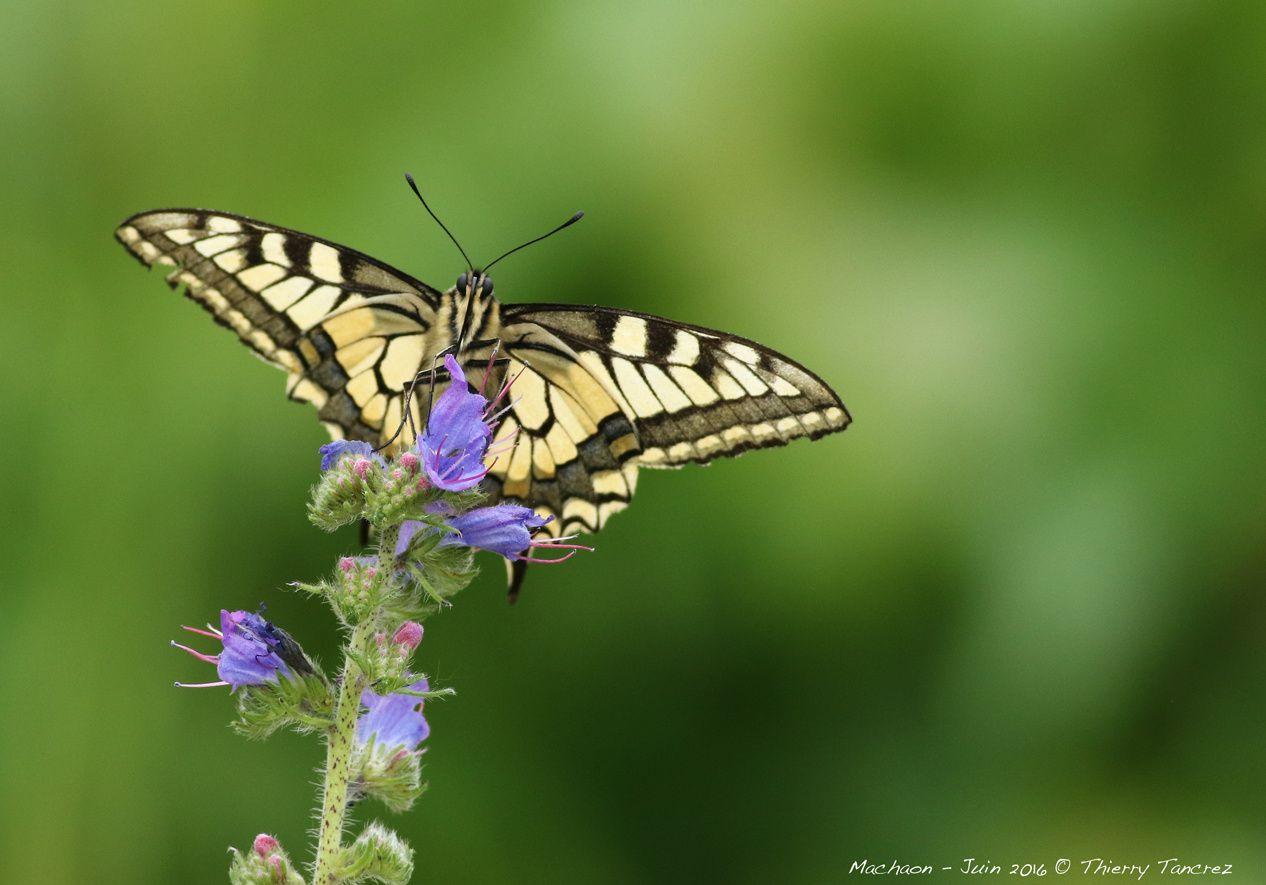 Le monde fantastique des papillons