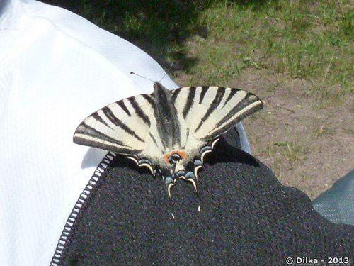 Le papillon et la couleuvre