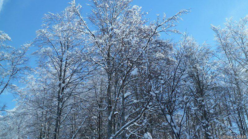 Branches d'arbres givrés