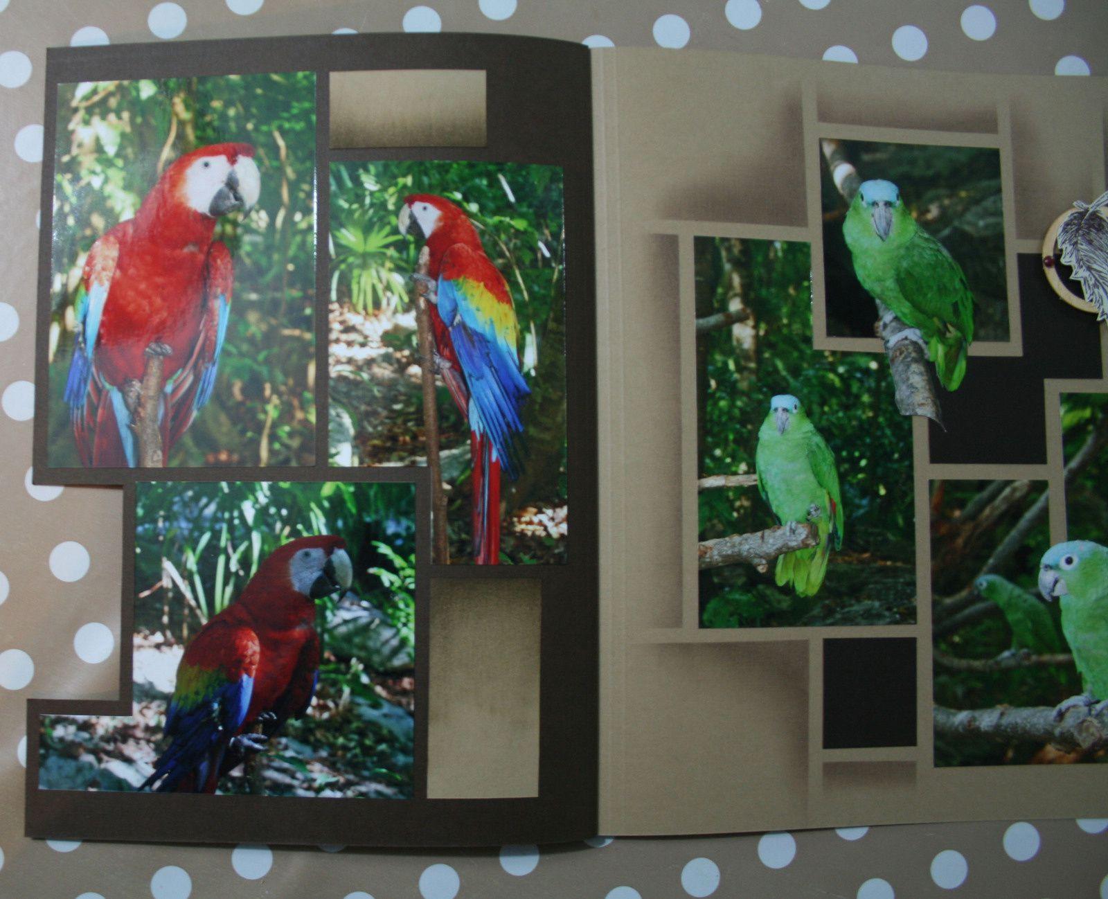 Aviario-bird Sanctuary
