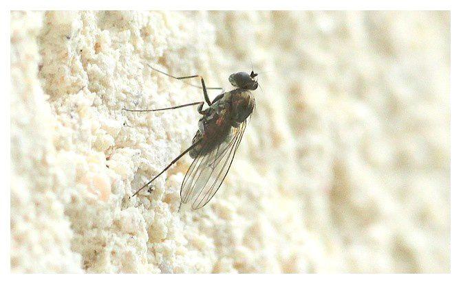 une mouche non identifier