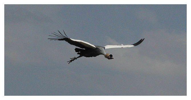 Parc aux oiseaux &#x3B; Villars les Dombes (01)