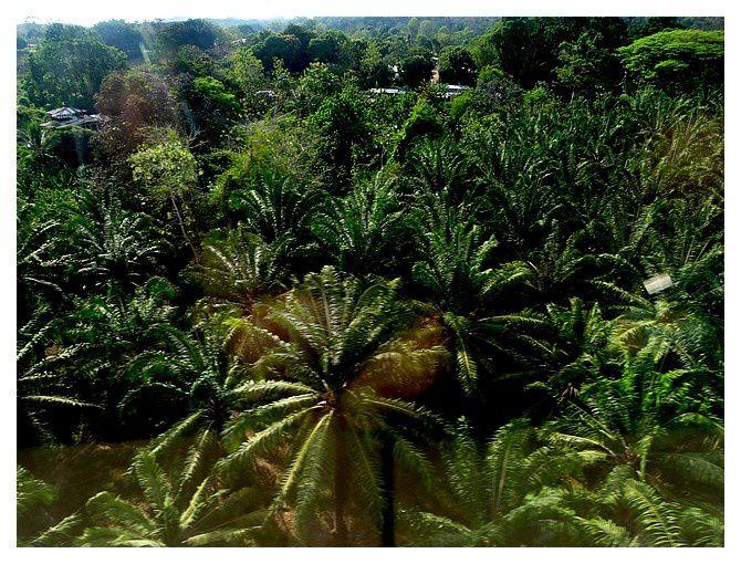 Costa Rica : jour 9 : Liberia - Quepos, vols intérieurs