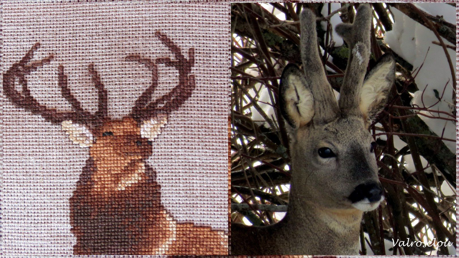 Cerf, cerf ouvre-moi ...