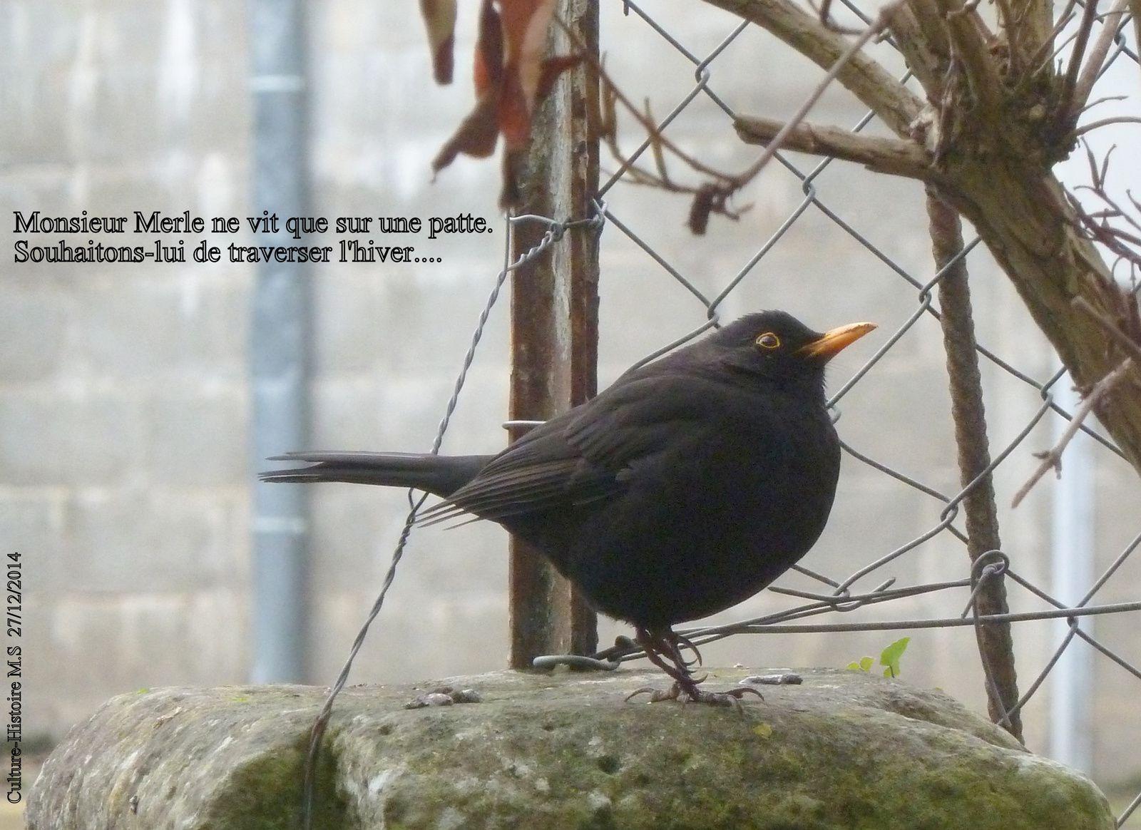 Au passage un gentil oiseau... malgré son handicap, un sacré sportif, même sur une seule jambe.