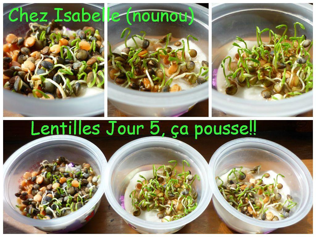 Lentilles Jour 5
