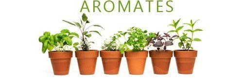 Les Aromates : Saveur et Santé