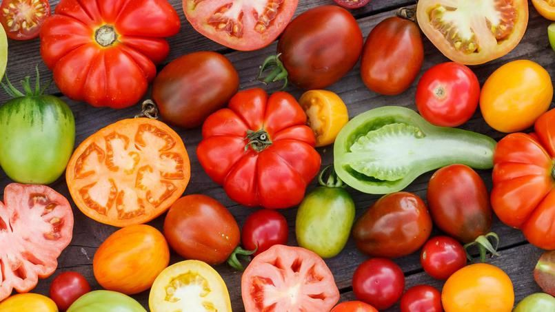 La tomate en vedette !