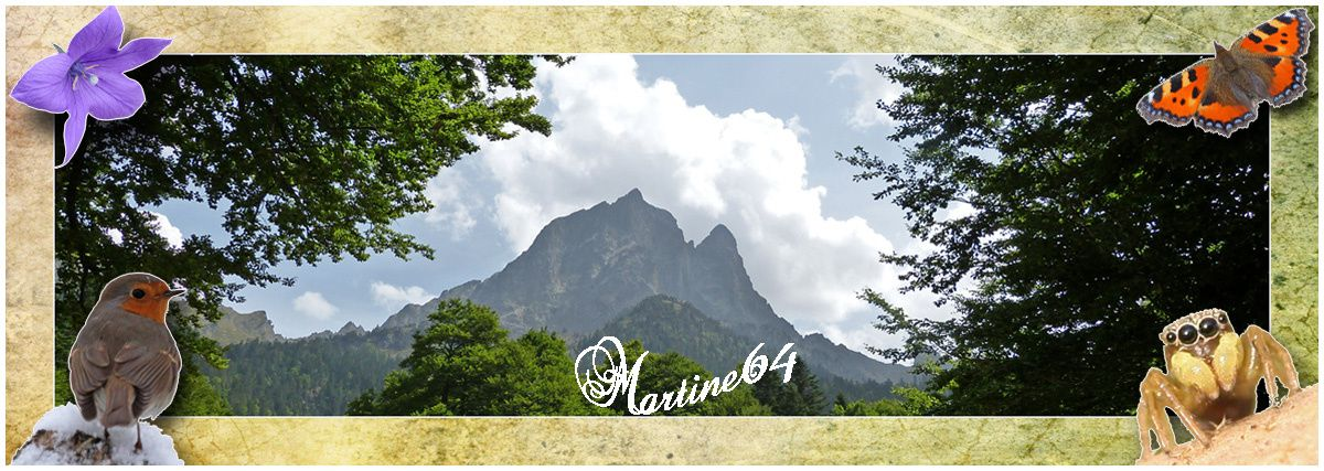 Martine 64