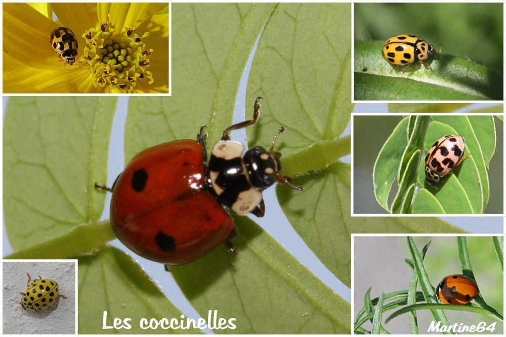 2012 : Les coléoptères