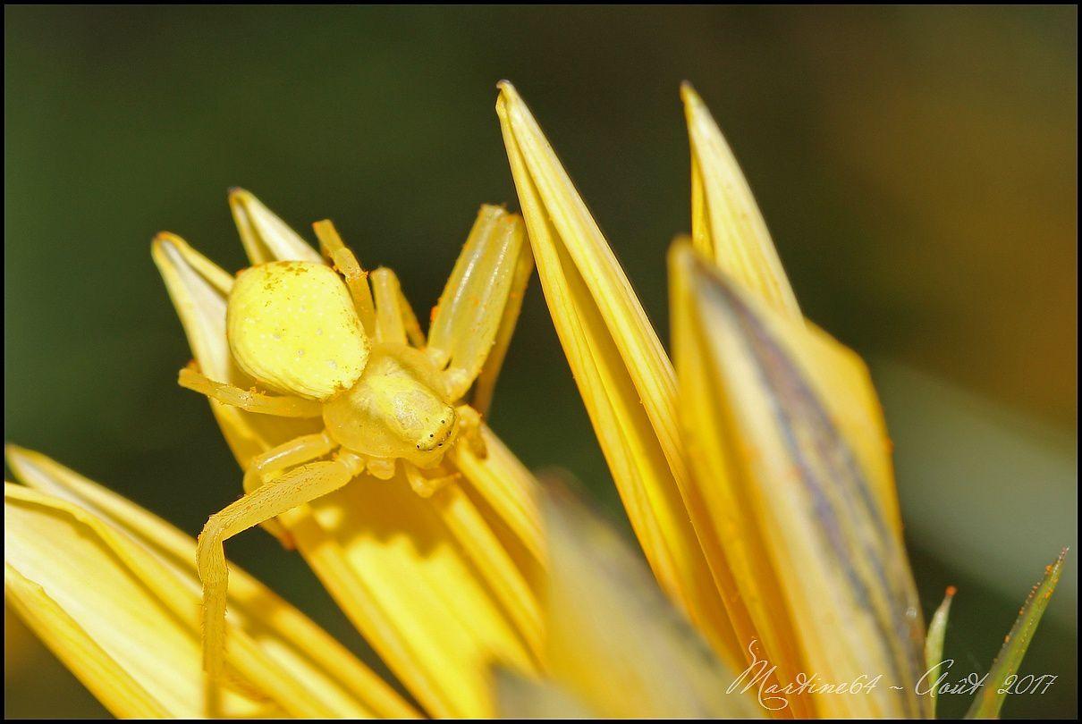 Blanche hier ..... jaune aujourd'hui