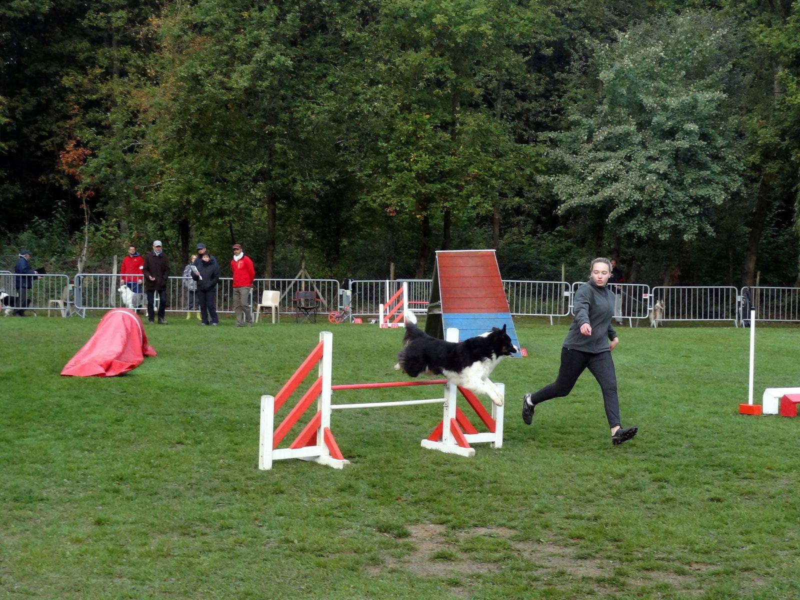 Concours Canin au Mée Sur Seine