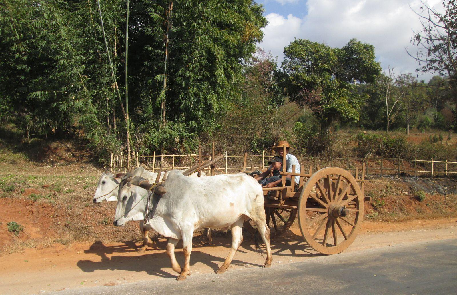 Birmanie 2014