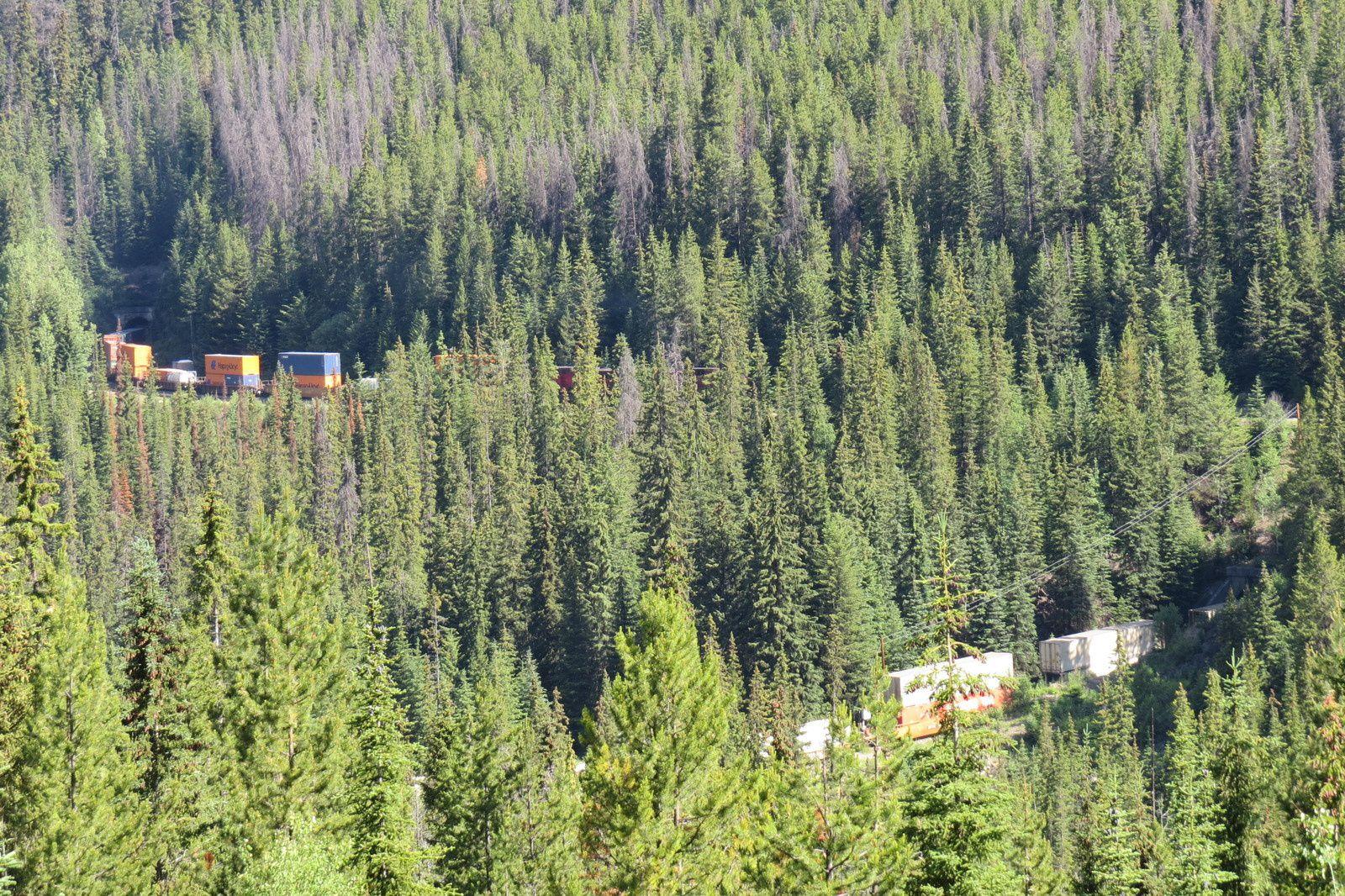 ALASKA 2016 ( 2.- Les Rocheuses et le Yukon )