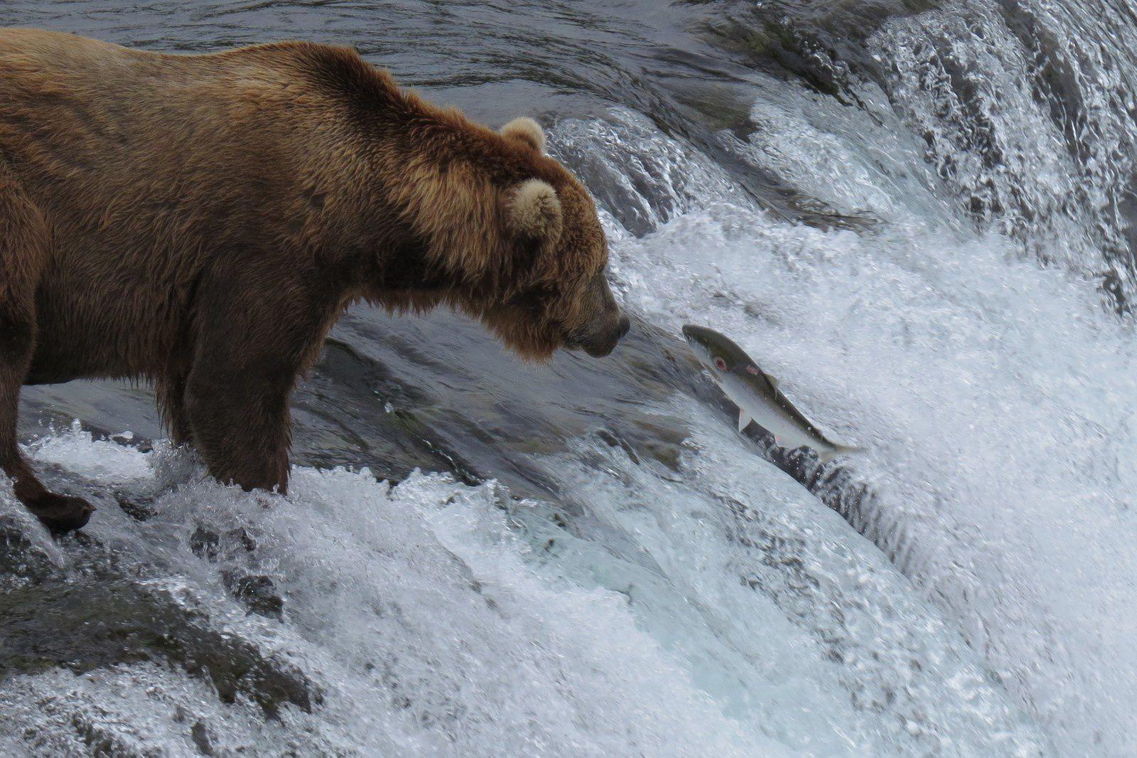 ALASKA ( 3.- &quot&#x3B;The Last Frontier&quot&#x3B;)