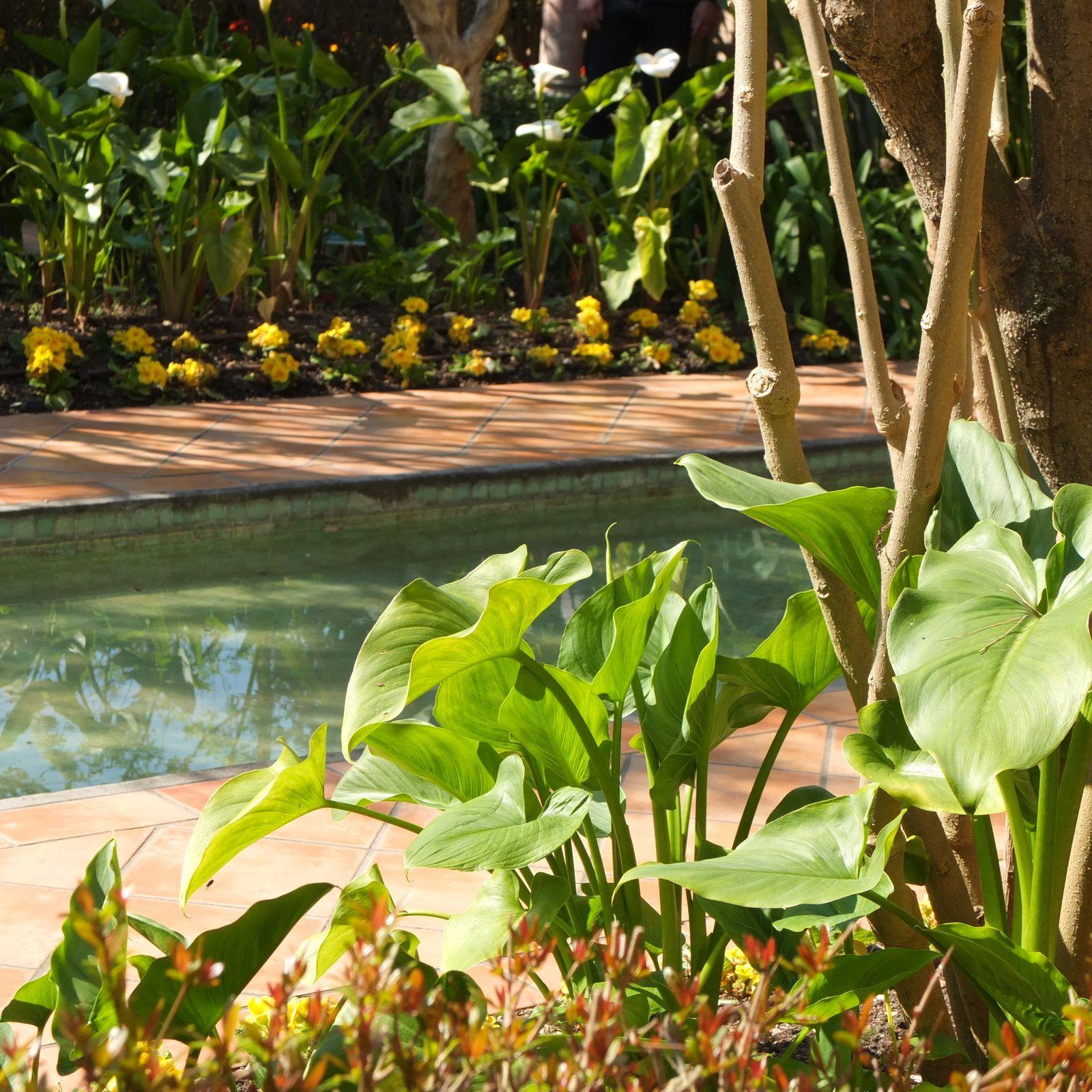 Mon coup de foudre, le jardin espagnol. Ou l'art du jardin à son apogée !