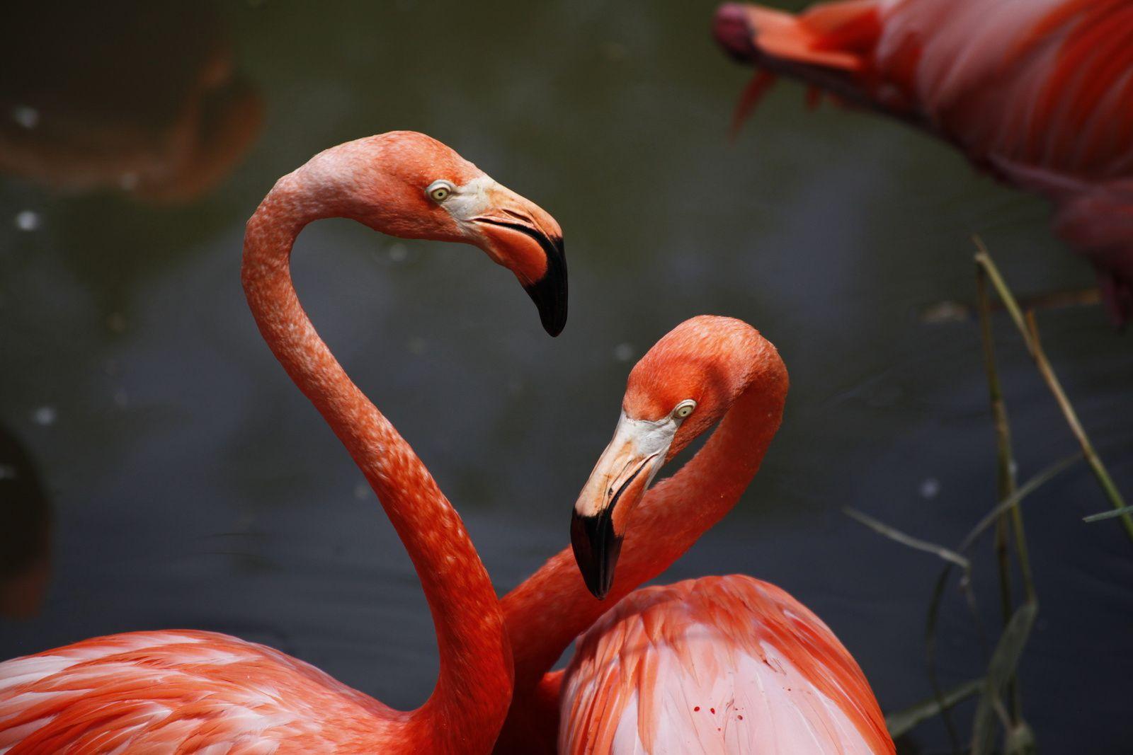 Zoo de Granby : première visite pour Jo