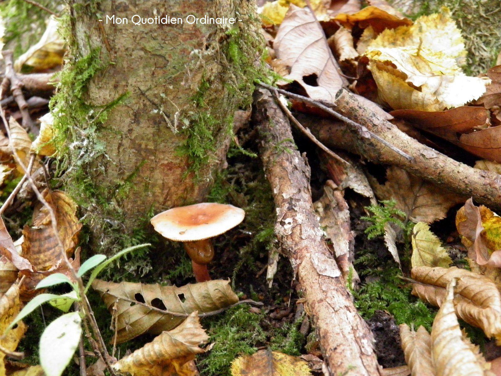 Les bruits de la forêt