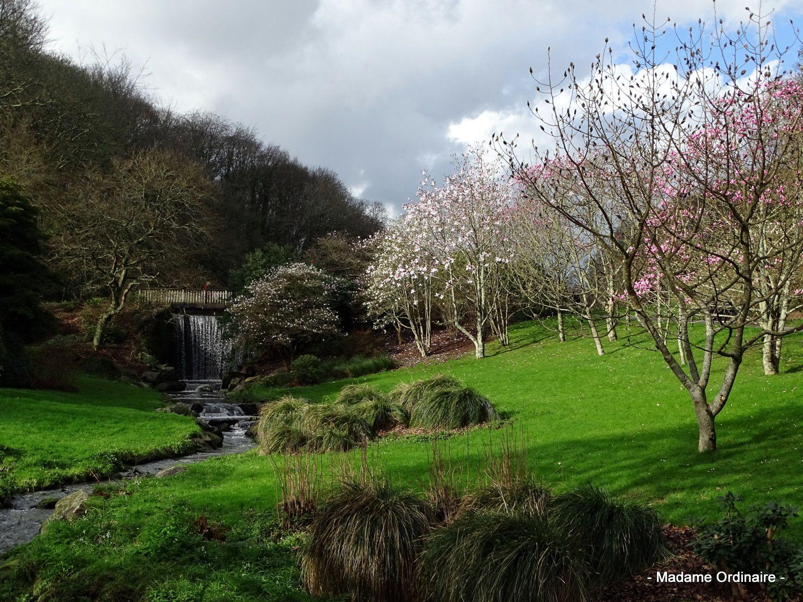 Des Magnolias dans la tempête