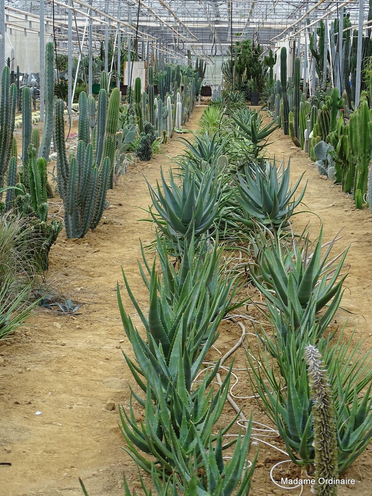 Et à Brest, il y a des Cactus!