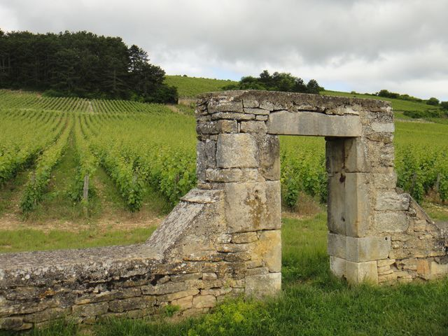 Il y a des vignes partout. Nous avons quitté nos vignes du Jura pour venir découvrir celles de la Bourgogne.