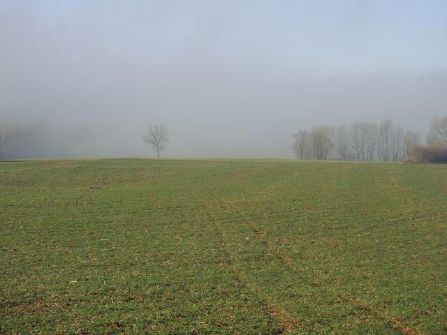 Et voilà de nouveau le brouillard, à Granges sur Baume.