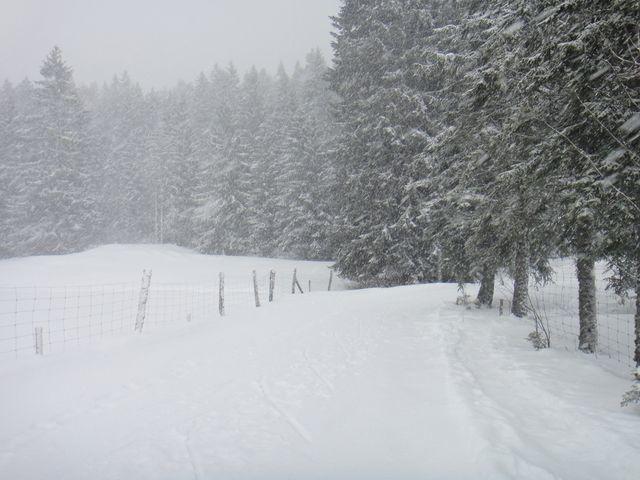 Finalement, je suis repartie, mais en raquettes et pas très loin car il a neigé très fort toute l'après-midi.