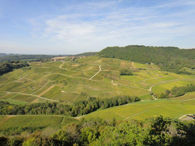 Les vignes de Château-Chalon.