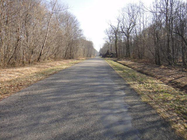 Belle petite route bien calme au milieu des bois.