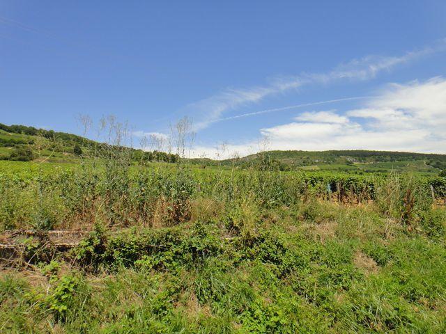 Je quitte la voie verte à Santenay pour rouler au milieu des vignobles de Bourgogne.