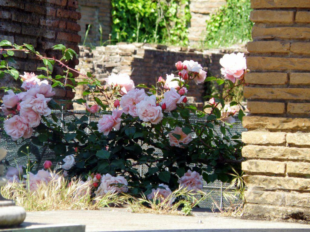 Fleurs de ruines!