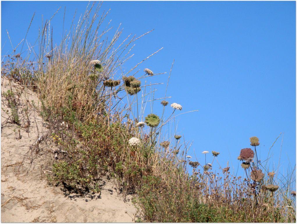 Les dunes d'Ostie