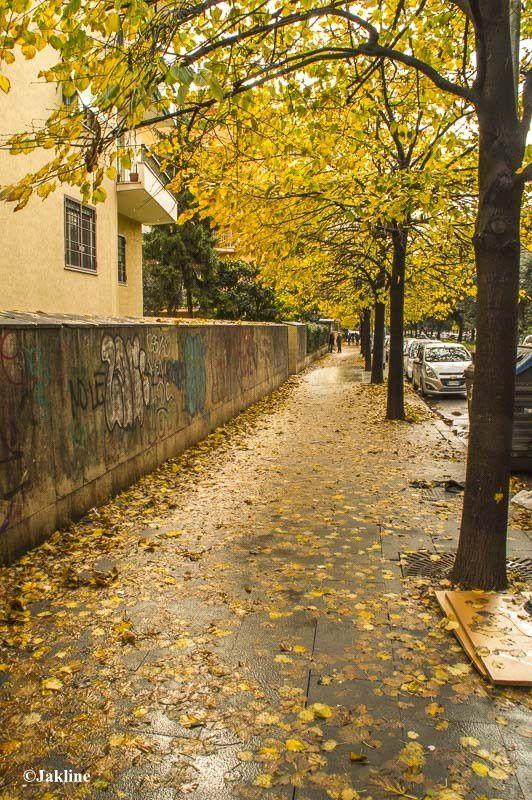 L'automne nous fait le grand jeu