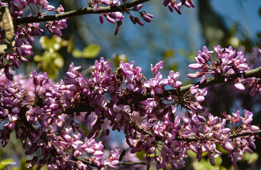 Le printemps en ville