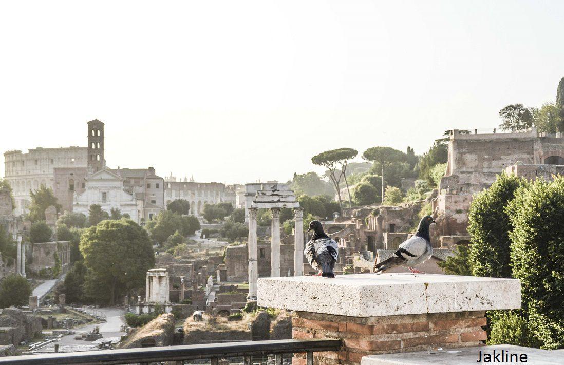 Petit tour matinal au dessus du Forum