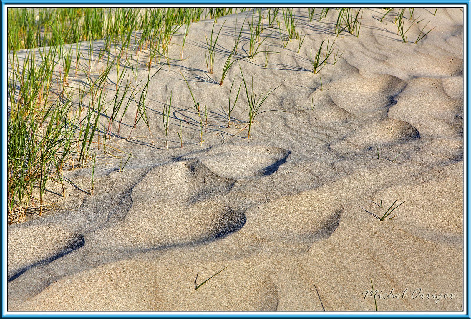 Dans les dunes du Touquet