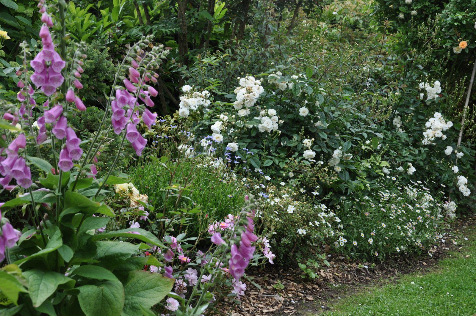 Duo pour un jardin - Devant de maison ...