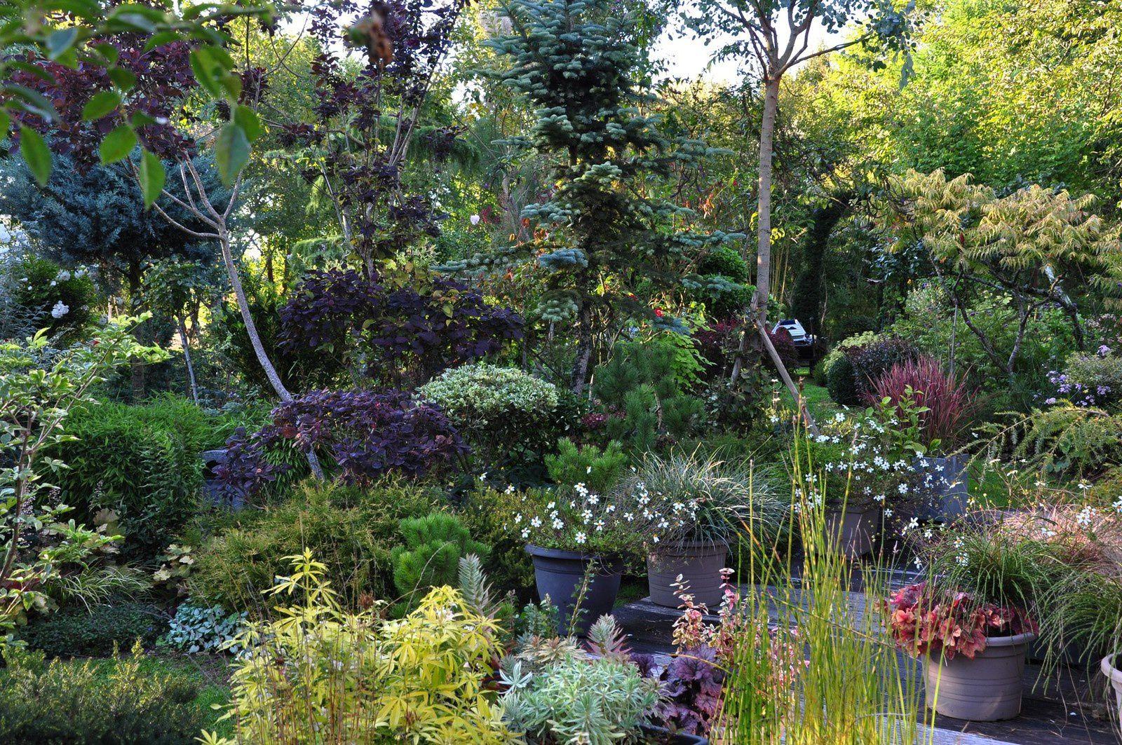 L'automne entre au jardin