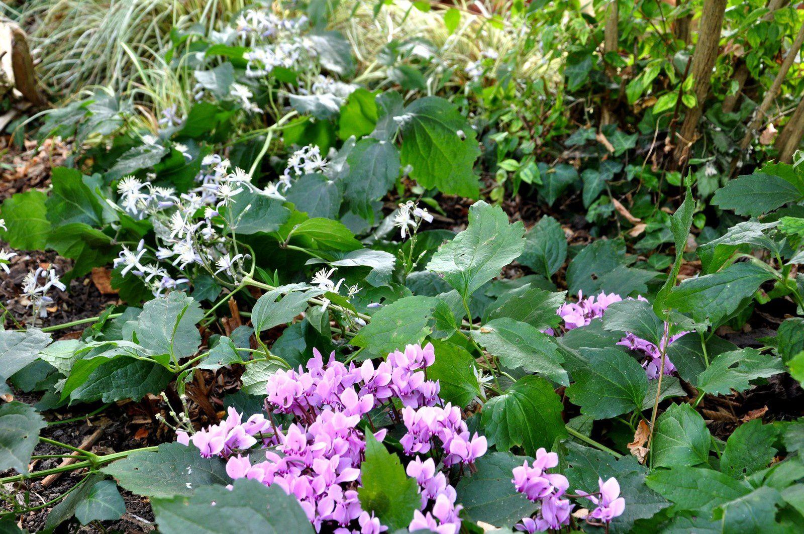 Le jardin continue malgré tout et le sec ne fait pas l'échec