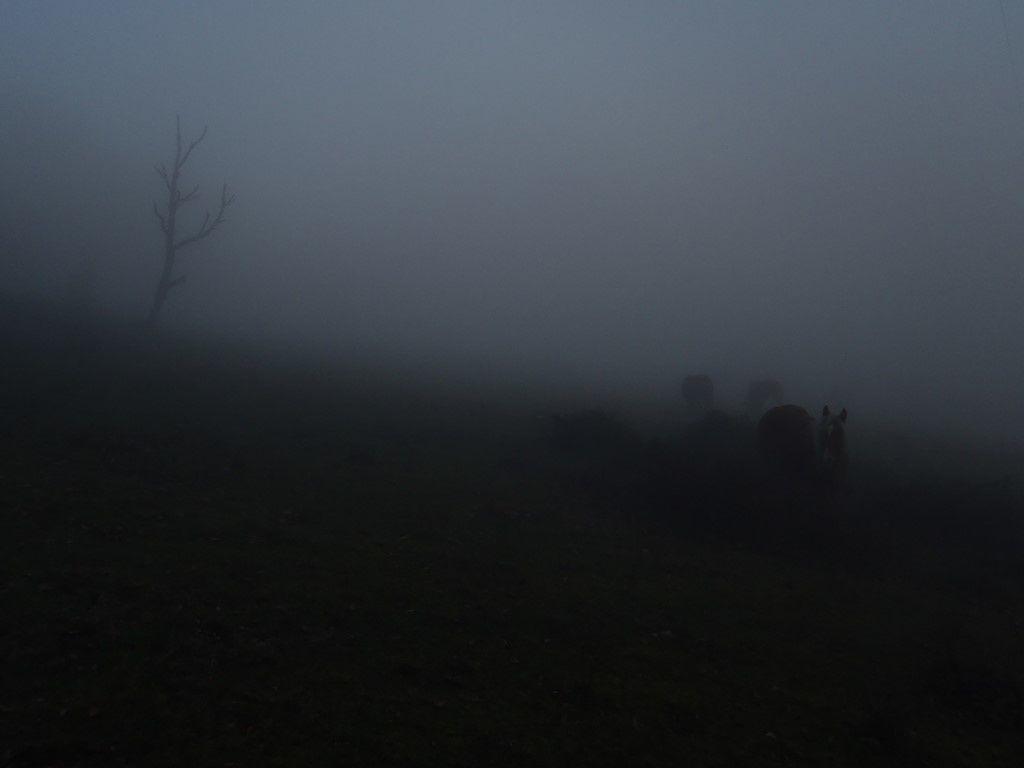 Marche à cannes au Grand-Ballon, le brouillard monte jusqu'à 900m.