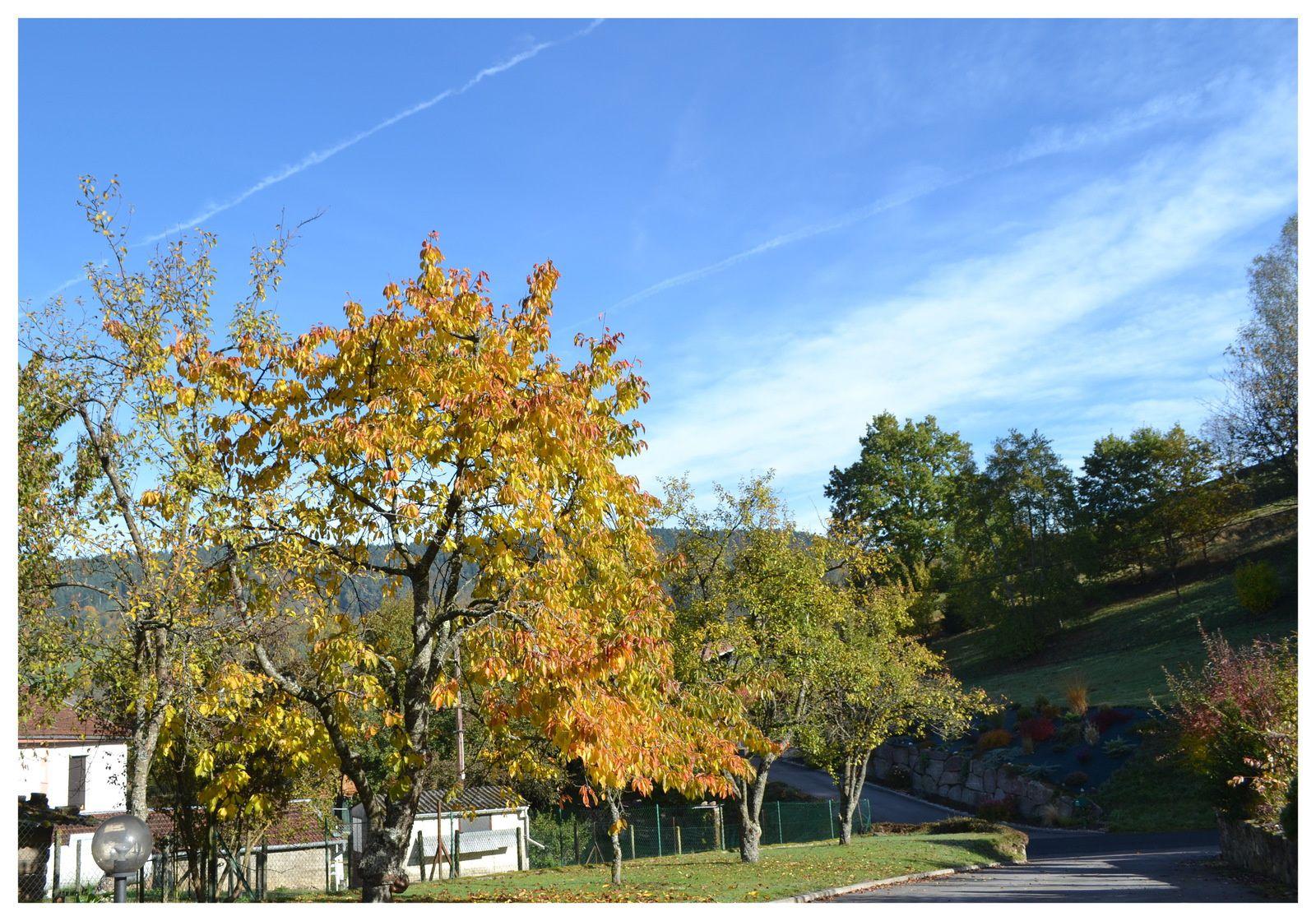 Le jardin aux couleurs d 39 automne on respire dans les for Le jardin aux epilobes