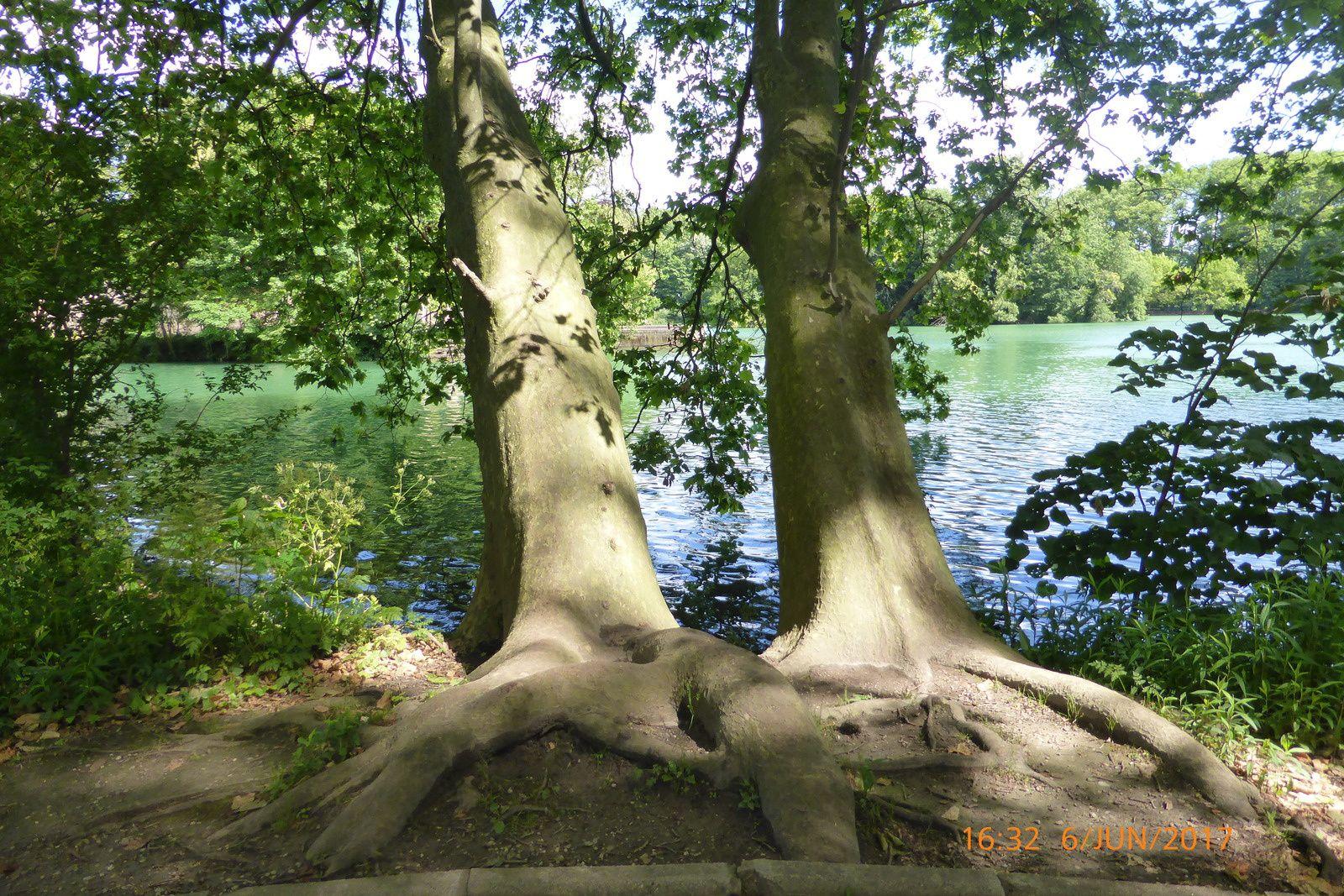 Su les rives du lac - Parc de la Tête d'or - Lyon