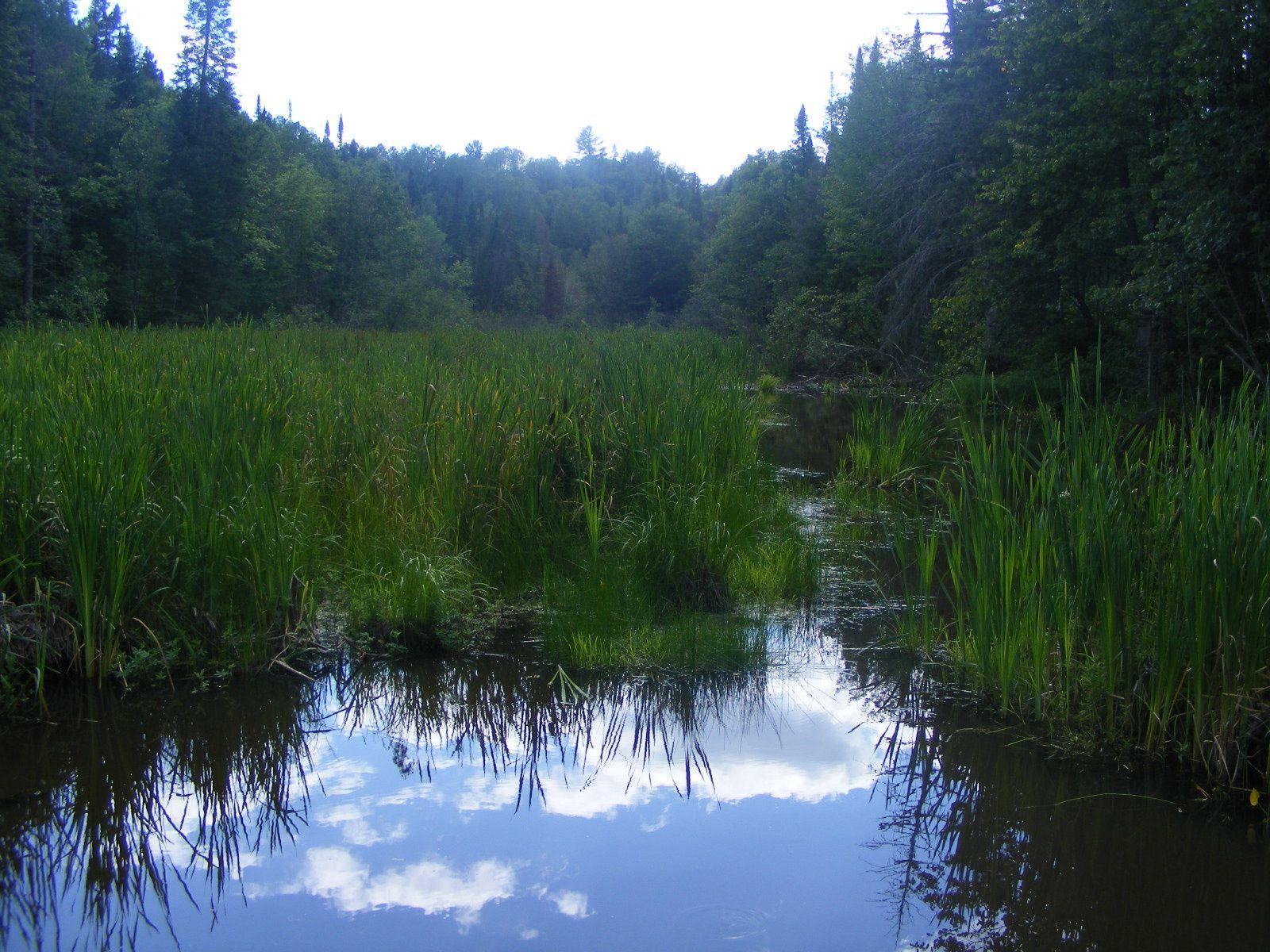 De jolis reflets dans l'eau, pris depuis le pont des castors