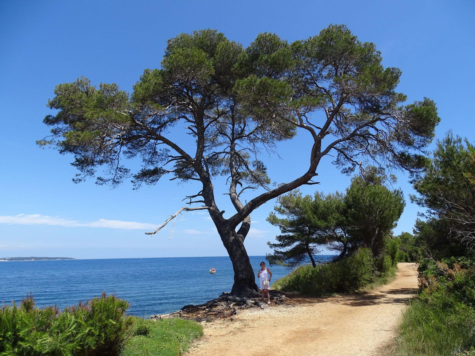 Tour de l'île à pieds et le fort