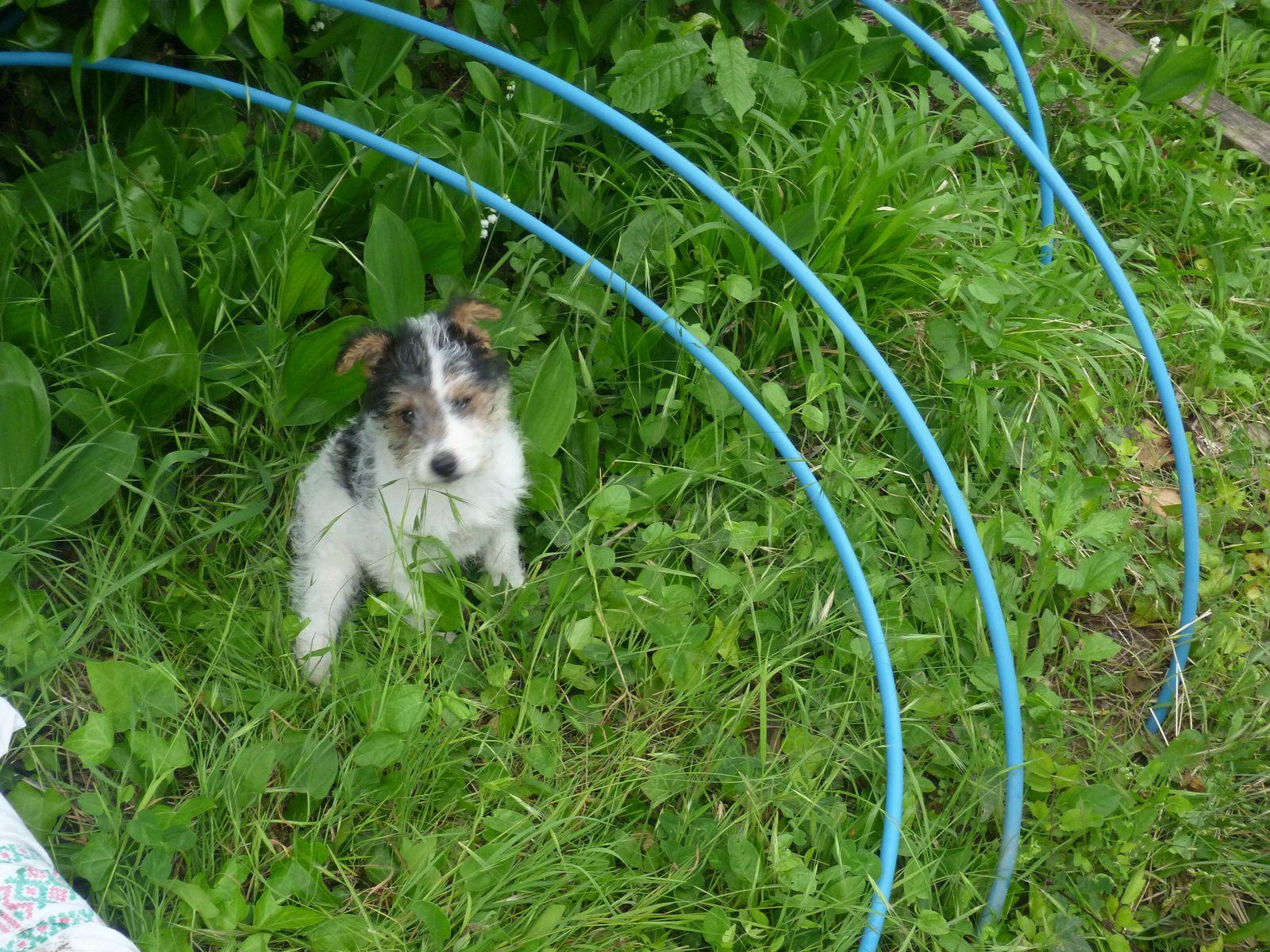 Jenny qui découvre le jardin...