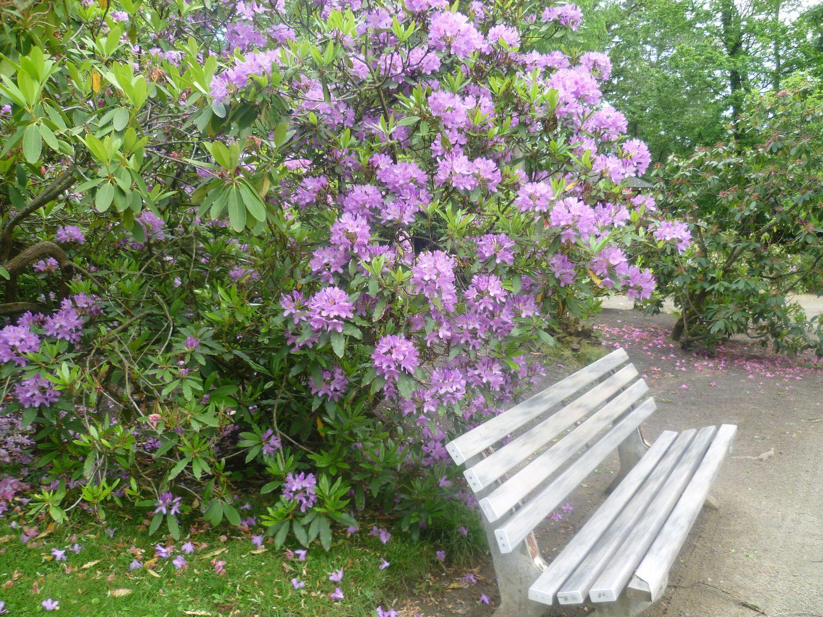 jardin botanique du Mans