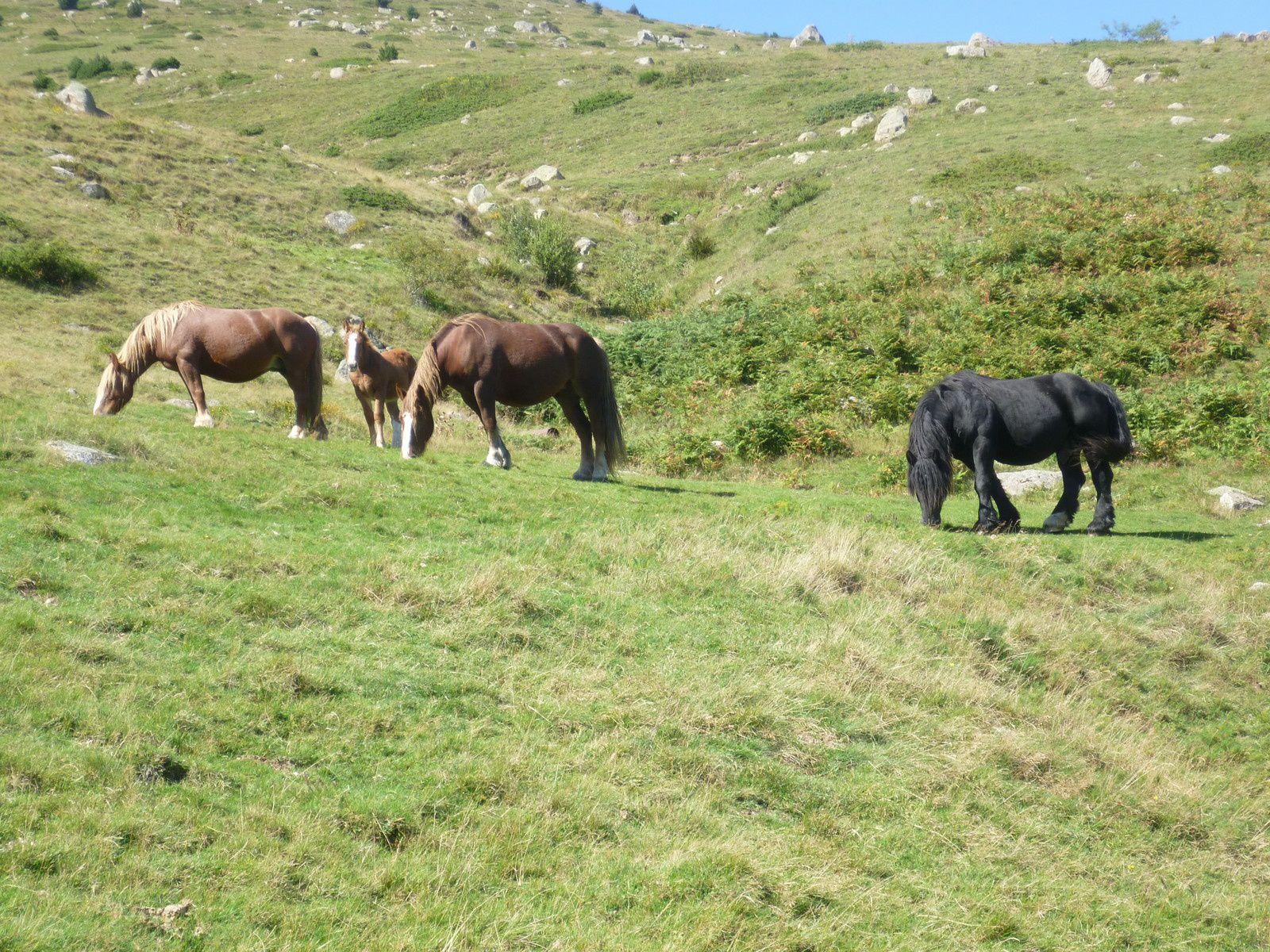 aux premières neiges, ces chevaux redescendront....bonne soirée....... amitiés