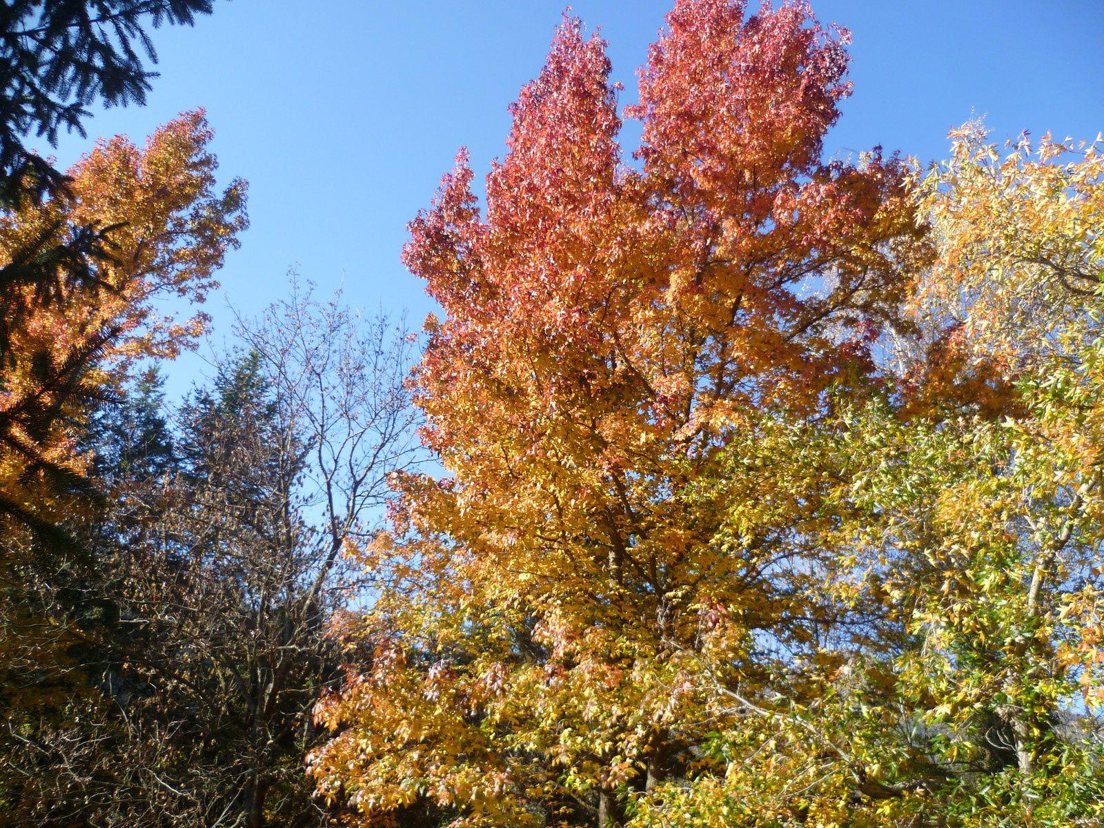 quel bel automne