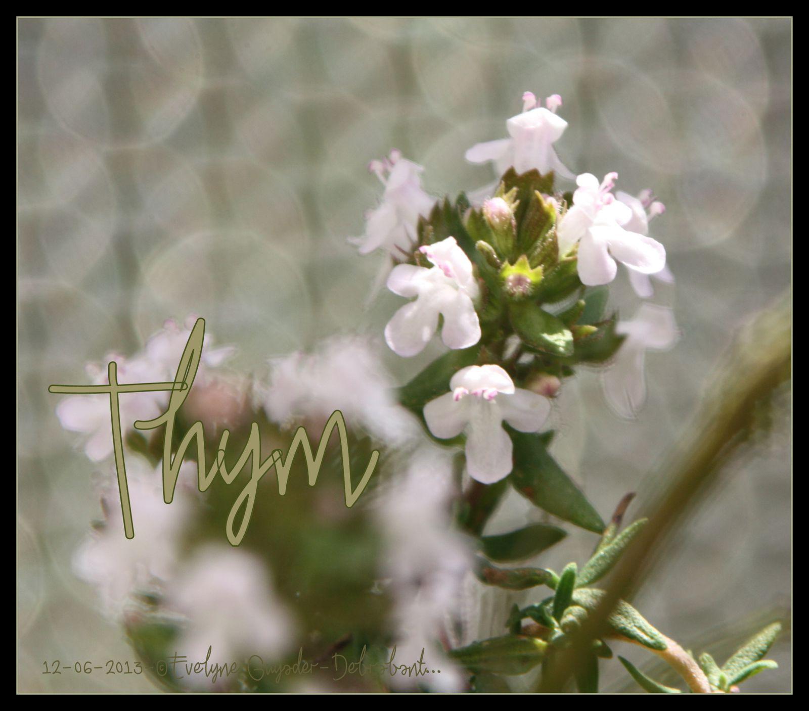Thym nom masculin plante aromatique utilis e en cuisine for Plante synonyme