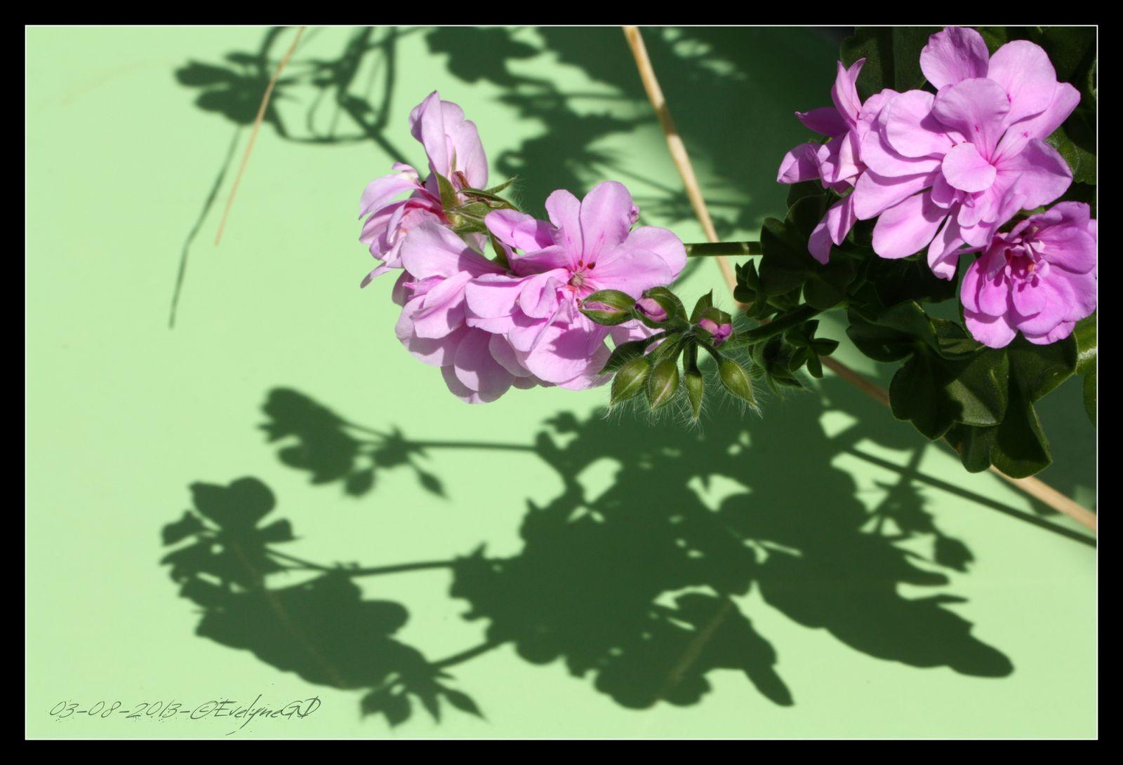 Des fleurs et des ombres